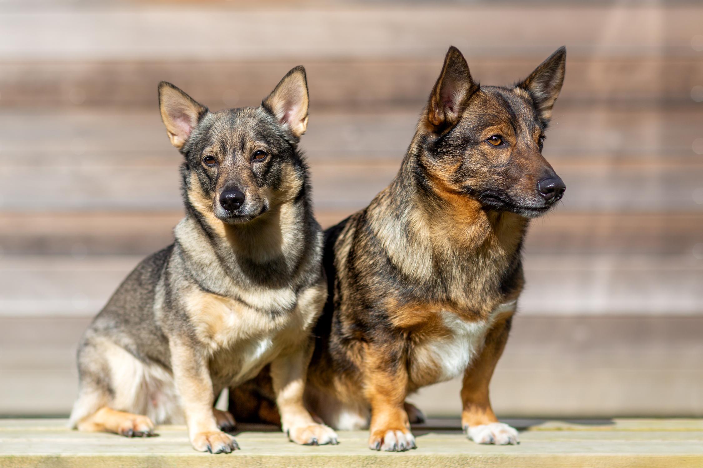 Sex hundar är nu utsedda att bli frimärksmotiv | PostNord